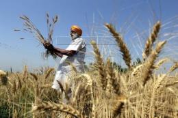 Thị trường nông sản tuần qua: Giá ngô kỳ hạn và đậu tương tăng gần 2%