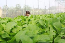 Nông nghiệp công nghệ cao: Gỡ khó từ địa phương