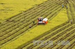 Tích tụ đất đai phải gắn với phát triển kinh tế nông thôn