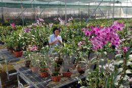 Đẩy mạnh ứng dụng khoa học công nghệ vào sản xuất nông nghiệp -  Bài 2