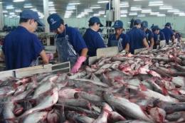 Sau thanh tra việc xuất khẩu cá tra sang Hoa Kỳ vẫn ổn định