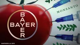 EC điểu tra thương vụ Bayer mua Công ty hạt giống biến đổi gen Monsanto
