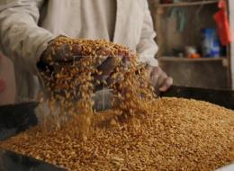 Thị trường nông sản cuối tuần qua: Giá lúa mỳ và ngô tăng