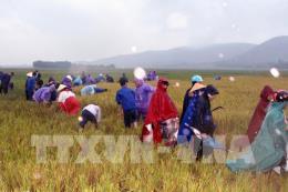Bão số 10: Thanh Hóa triển khai các biện pháp đối phó với mưa lớn sau bão