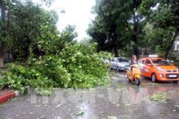 Tập đoàn Điện lực Việt Nam khắc phục hậu quả bão số 10