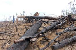 Phá rừng tự nhiên để trồng rừng: Xử lý nghiêm minh hành vi phá rừng tự nhiên