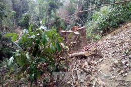 Phát hiện hai điểm phá rừng phòng hộ để trồng keo ở Quảng Ngãi