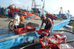 Việt Nam nỗ lực chống khai thác hải sản bất hợp pháp