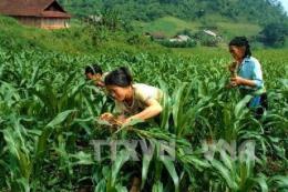Tái cơ cấu ngành trồng trọt nâng cao giá trị cho vụ Đông