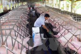 Phát triển kinh tế trang trại gặp khó về vốn và đất đai