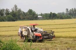 Phát triển kinh tế bền vững: Khai thác thế mạnh từ nông nghiệp