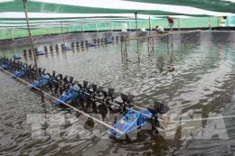Xây dựng liên kết chuỗi trong nuôi tôm