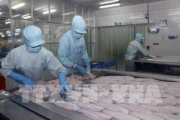 Phát triển kinh tế bền vững: Thúc đẩy mặt hàng cá tra xuất khẩu