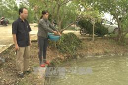 Quảng Ngãi điều tra nguyên nhân cá chết hàng loạt