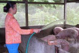 Ngành chăn nuôi đề ra nhiều mục tiêu năm 2018