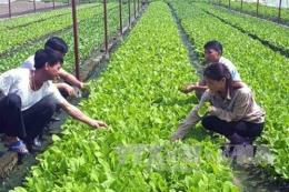 Phát triển nông nghiệp hữu cơ - Bài 1: Nhiều mô hình hiệu quả