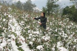 Dự báo thời tiết 5 ngày tới: Miền núi phía Bắc phòng ngừa băng giá và sương muối