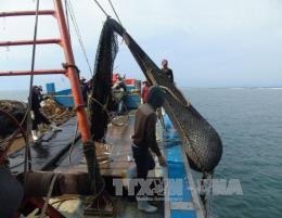 Triển khai các giải pháp cấp bách khắc phục thẻ vàng IUU đối với khai thác hải sản