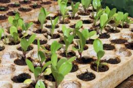 Khởi nghiệp từ niềm đam mê - Bài 2: Đưa nông nghiệp công nghệ cao về bản làng