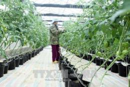 Phát triển hợp tác xã kiểu mới - Bài 1: Giúp nông dân làm giàu