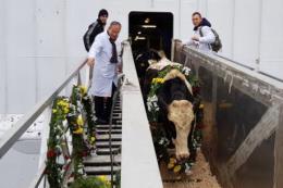 Tập đoàn TH đón đàn bò sữa 1.100 con nhập khẩu từ Mỹ về liên bang Nga