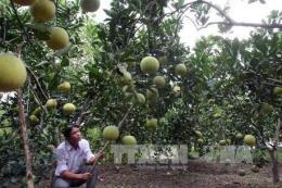 Quảng Ninh khuyến khích nông dân dán tem điện tử thông minh cho sản phẩm OCOP
