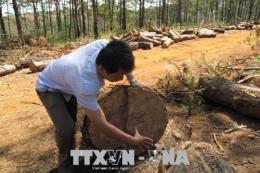 Đắk Nông tìm biện pháp ngăn chặn, xử lý tình trạng phá rừng