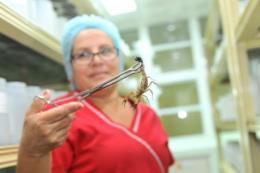 """Nhà sản xuất Cuba nói gì về """"thuốc chữa ung thư"""" Vidatox gây tranh cãi ở Việt Nam?"""