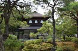 Nét mới khi đi du lịch cố đô Kyoto