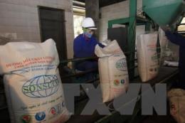 Nhiều khó khăn bủa vây nhà nông trồng mía và doanh nghiệp sản xuất