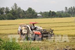 An Giang: Thị trường tiêu thụ lúa vụ Đông Xuân gặp khó