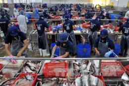 """Vượt rào cản thương mại: Cá tra Việt Nam vẫn """"bơi"""" ra thế giới"""