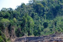 Đắk Lắk: Rà soát toàn bộ diện tích rừng tự nhiên