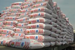 Đạm Cà Mau đảm bảo nguồn cung kali chất lượng cho vụ Hè Thu 2018
