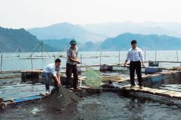 Xây dựng thương hiệu cá sông Đà