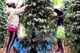 Quảng Trị lựa chọn cây trồng, vật nuôi tham gia chuỗi sản phẩm chủ lực quốc gia