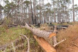 Quảng Trị xem xét truy cứu trách nhiệm hình sự đối tượng xâm hại rừng