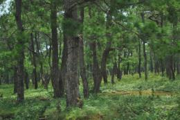 Quảng Trị đề nghị chuyển đổi mục đích sử dụng trên 113 ha rừng và đất lâm nghiệp