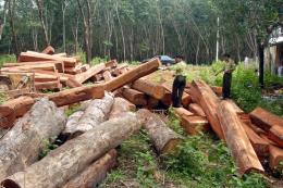 Bắt khẩn cấp đối tượng mua bán, tàng trữ hơn 60 m3 gỗ không rõ nguồn gốc
