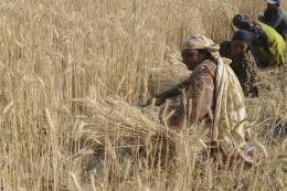 Giá nhiên liệu thế giới tăng, người nông dân thêm gánh nặng