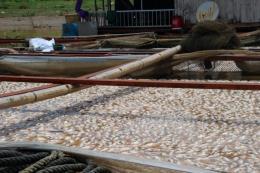 Nguyên nhân khiến cá chết hàng loạt trên sông La Ngà