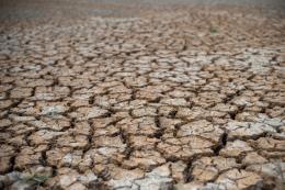 Tiêu điểm trong ngày: Phục hồi đất suy thoái trước khi quá muộn