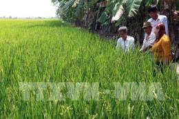 Thay đổi tư duy trong sản xuất nông nghiệp - Bài 2: Cần nhiều giải pháp đồng bộ