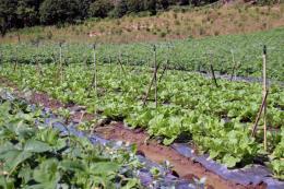 Quảng Trị thu hút nhiều dự án đầu tư vào nông nghiệp công nghệ cao