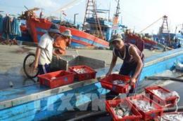 """Cơ hội và thách thức của ngành khai thác hải sản - Bài 1: Bài học từ """"thẻ vàng"""""""
