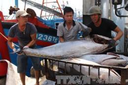 Cơ hội và thách thức của ngành khai thác hải sản - Bài 2: Tận dụng cơ hội mới