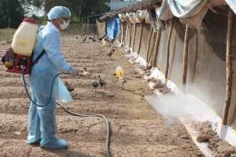Chủ động phòng, chống dịch bệnh động vật sau mưa lũ