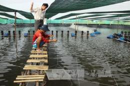 Khắc phục ô nhiễm môi trường do nuôi tôm siêu thâm canh