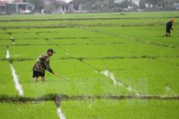 Khẩn trương chống ngập úng cho cây trồng do mưa lớn