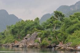 Thử nghiệm diệt trừ thực vật ngoại lai xâm hại ở Vườn Quốc gia Phong Nha-Kẻ Bàng